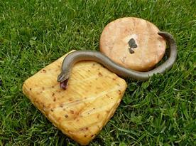 uzené marinované syry chutnají i hadovi