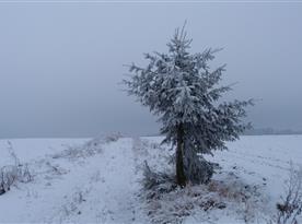 Zimní cesta ze Studené na Bukovici II.