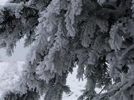 Zima kolem Šibené ve Studené kouzlí a vytváří nádherné námrazy