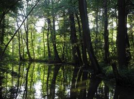 Okolní lužní les