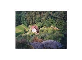 Dům je obklopen zelení - pohled z blízké skály