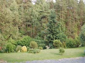 Výhled z oken pokojů do blízkého lesa