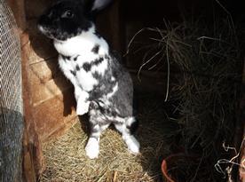 naše zvířátka-králíčci