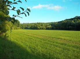 Louka před naší chatou, pohled od lavičky, krásné místo k pobytu