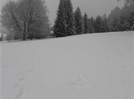 Nasnezilo 15 cm sněhu;-)