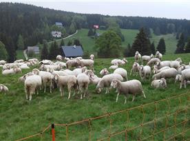Každoroční krmení oveček, vzadu ta malá chata je naše.-)