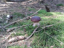 A zase houba:-)Rostou hlavně pravé hřiby, křemenáče i kozáci..