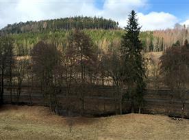 Okolí plné lesů