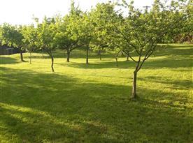 Zahrada - možnost konzumace ovoce