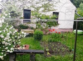 Bylinkový záhon na zahradě