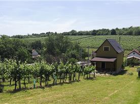 Pohled z vinohradu