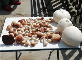 houbařská sezóna