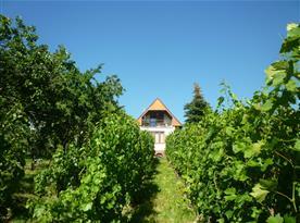 Pohled na chatu z vinohradu