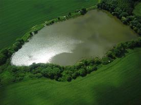 Polský rybník cca 1,5 km pěšky