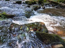 Řeka Oleška