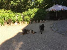 Psi majitelů