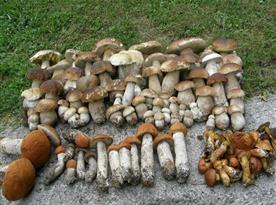 Okolní lesy jsou houbařským rájem