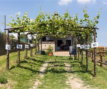 Vinný sklep U Šabatů Mutěnice
